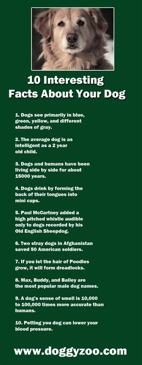 facts about puppies 10 interesting facts about your doggyzoo comdoggyzoo