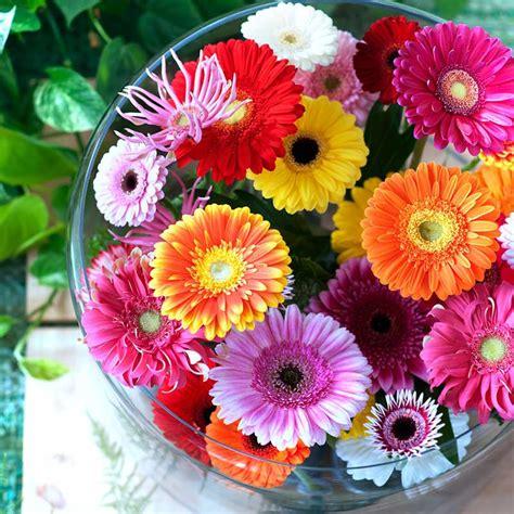 linguaggio dei fiori gerbera primavera tempo di fioriture il significato segreto dei