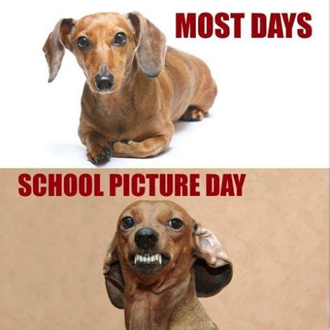 Funny Dachshund Memes - 292 best that s funny images on pinterest funny stuff