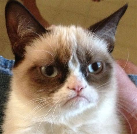 Grumpy Face Meme - grumpy cat meme photo 35215475 fanpop