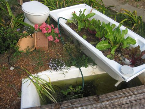 bathtub aquaponics bathtub aquaponics 28 images aquaponics in a bathtub