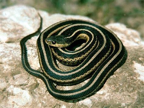animals eat garden snakes quora