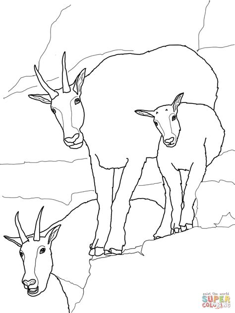 baby goats coloring pages mountain goat baby with family coloring online super