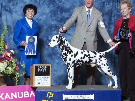 dalmatian puppies for sale oregon merry go dalmatians puppies for sale