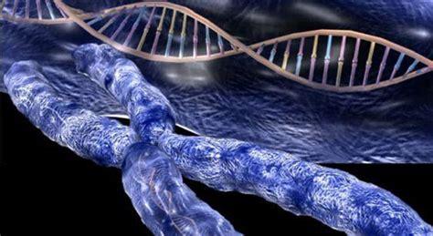 cuantas cadenas de adn tiene un humano opiniones de analisis moleculares de adn