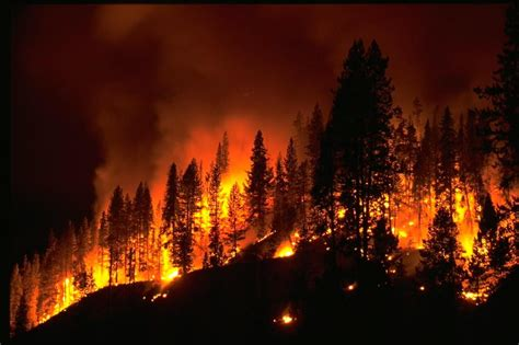 fighting a forest fire your pain back in control