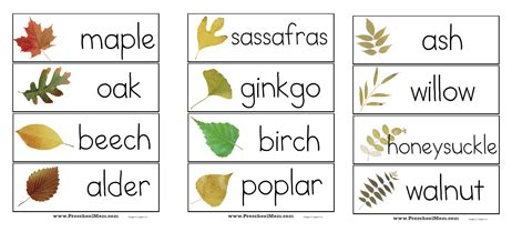 printable leaves and names parts of a leaf printables