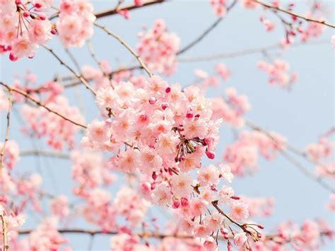 i fiori di bach sono efficaci cosa sono come si scelgono e come di usano i fiori di bach