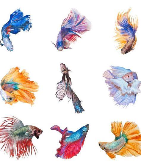 tropical fish tattoo designs tropical fish designs elaxsir