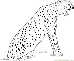 what color is a cheetah cheetah howling coloring page free cheetah coloring