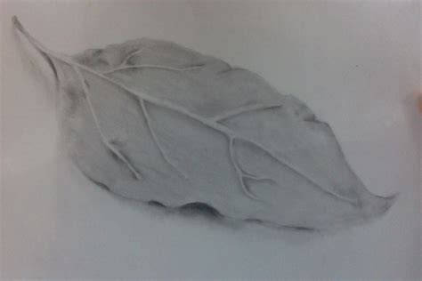 Drawing Leaves by Leaf Drawing Ialvarez15