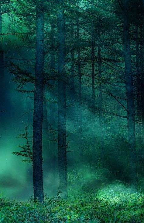 deep forest green deep forest green tfy pinterest