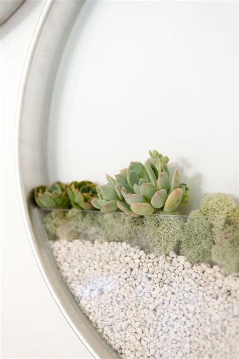 vertical garden planter for succulents and air plants