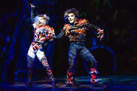 Giveaway Kittens Brisbane - cats the musical brisbane season reviews