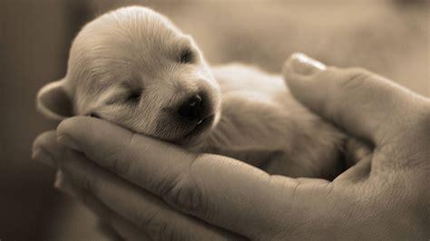 newborn puppy dogs wallpaper
