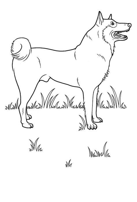 realistic dog coloring pages coloring home realistic dog coloring pages coloring home