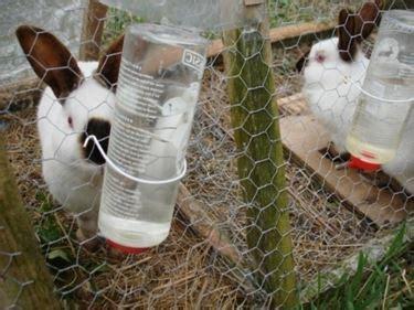 alimentazione coniglio da carne allevamento conigli da carne conigli