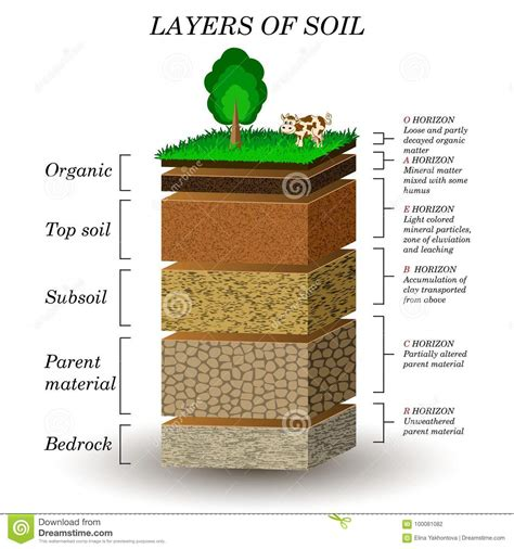 layers of the soil diagram mineral illustrations vector stock images