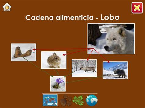 cadena trofica tundra ecosistemas 1