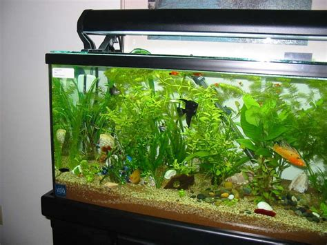 aquarium design x aquarium designs to suit your home ideas 4 homes