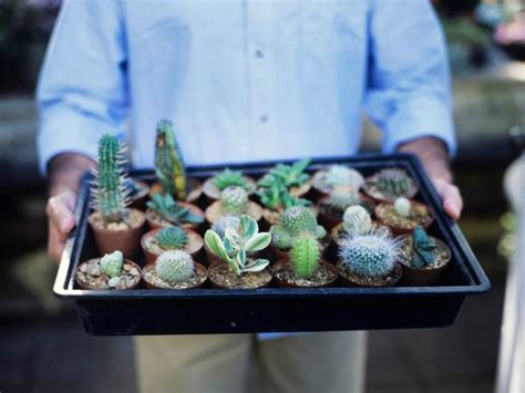 cultivating cacti  succulent plants hgtv