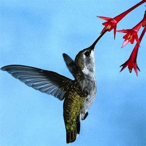 hummingbird care carehummingbird twitter