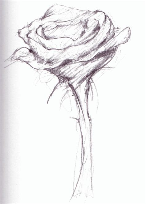 quick sketches jason rose flower 20 20quick 20sketch thought puddles