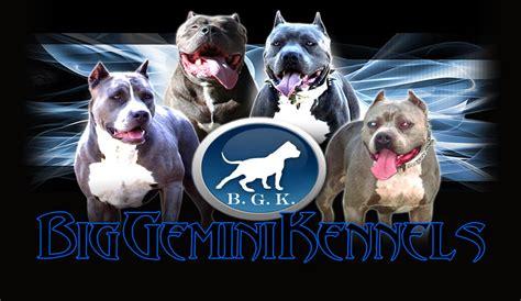 big kennels big gemini kennels
