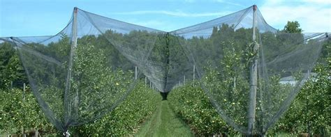 how to net a fruit tree hail netting protecting your crops fruit trees and gardens