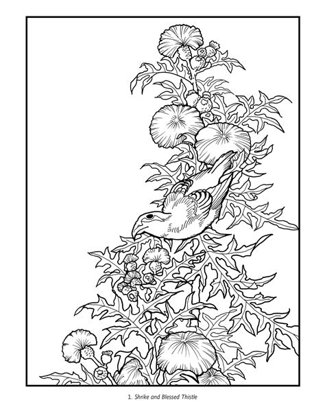 flowers coloring book hokusai birds and flowers colouring book