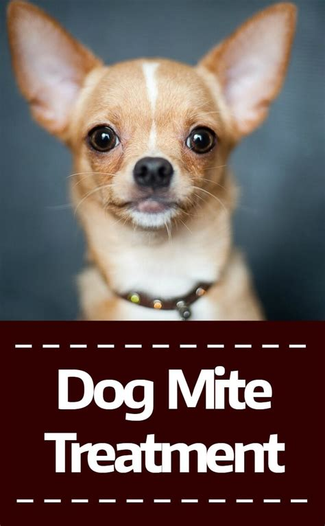 how to treat mites on dogs mite treatment pbs pet travel