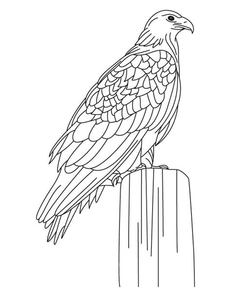 free coloring pages of body parts of eagle