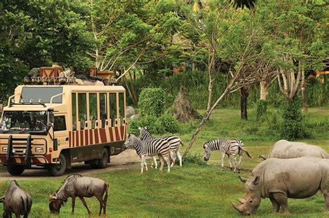 Safari Anak Bali Safari Marine Park 5 top destinasi liburan ke bali dengan anak anak avilla bali