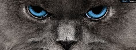 Cat Cover by Gray Cat With Blue Cover
