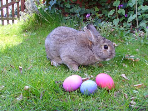easter bunny 2018 dr