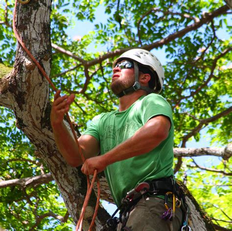 Uiuc Find Find An Arborist In Illinois With The Illinois Arborist Association