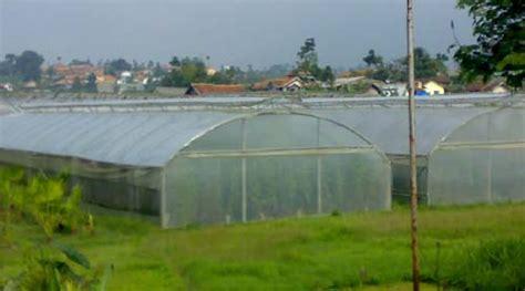 Plastik Uv Untuk Atap Green House plastik uv jual plastik uv ultra violet untuk greenhouse