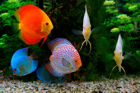 Fish For fish that can be tank mates with your not so social discus