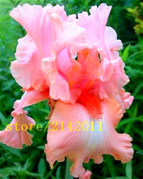Iris Teilen by Kaufen Gro 223 Handel Iris Aus China Iris Gro 223 H 228 Ndler