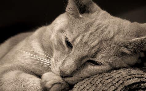 imagenes gatos tristes im 225 genes tristes de gatos im 225 genes tristes im 225 genes tristes