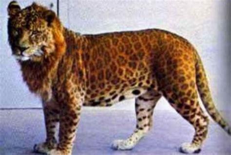 9 Fascinating Real Hybrid Animals