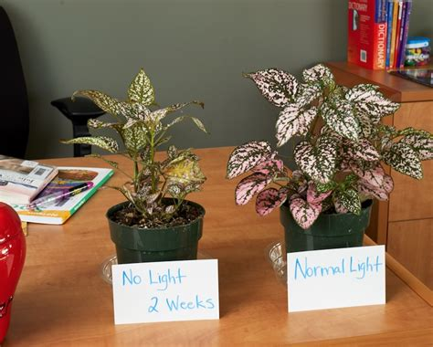 no light plants help you save mineral water and also fertilize your plants