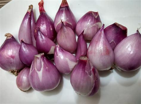 Alat Potong Cincang Bawang Putih Jahe khasiat bawang merah untuk kesehatan dan caranya sehat luwih indah