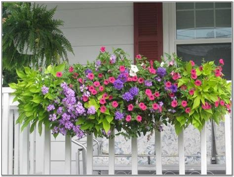 Flowers For Planter Boxes In Sun by 17 Best Ideas About Sun Plants On Sun
