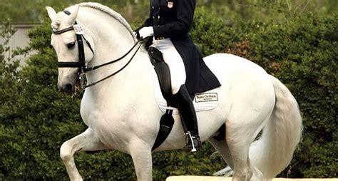 cortile spagnolo cavallo spagnolo cavalli cavallo spagnolo animali da
