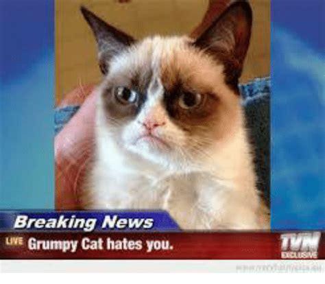 Newspaper Cat Meme - newspaper cat meme 28 images newspaper cat meme free a