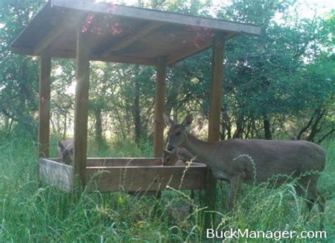 what can i feed the deer in my backyard what can i feed the deer in my backyard what can i feed the deer in my backyard 100