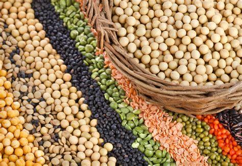 vegetables vs protein animal protein vs vegetable protein the veggie table