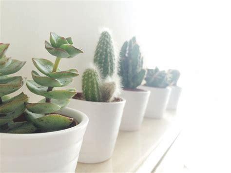 indoor succulents  thrive sunset magazine