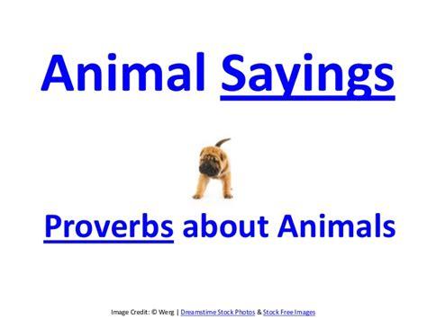 1 1 Animal Quotes Beruang animal sayings